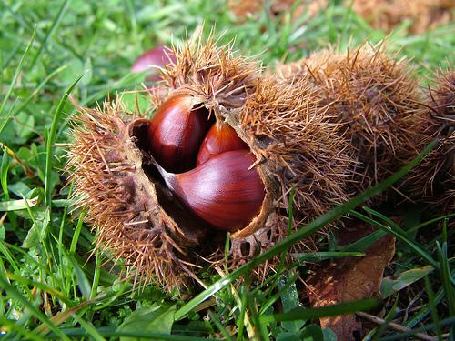 alimentazione sana autunno